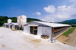 陽光降り注ぐ鶏舎で大切に育まれております 自社の唐津養鶏場