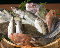 【新鮮魚介】 島根のものを中心に、季節の味を仕入れております