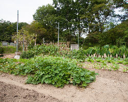 契約農家さんから仕入れた新鮮な野菜を沢山食べてもらいたいです