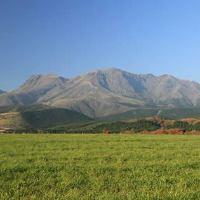 黒毛和牛・黒豚は九州の提携牧場から直送で仕入れています。