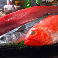 《旬の鮮魚》 脂がのった新鮮な魚介を刺身、お寿司でどうぞ