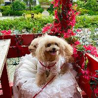 テラス席はペットOKです!愛犬を一緒にお食事をごゆっくりと。