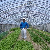 お野菜は西区の農家さんまで 直接仕入れに行っています。