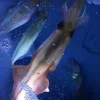 新鮮な生け簀の海鮮料理★ 季節に応じた鮮魚が味わえます。