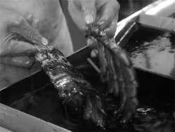 創業より五十余年 鰻の滋養が染み込む秘伝のたれ