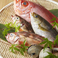 【新鮮魚介】 活きのいい鮮魚、揃ってます!コースではお造りも