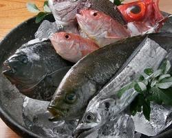 ◆ 獲れたて旬魚 ◆ その日によって種類は異なります。