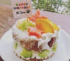 Dog用バースデーケーキ 1,500円税込 ご予約受付中
