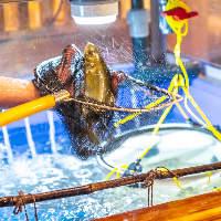 店内に生簀を完備。鮮度抜群の魚介はお造りや焼き魚でもご提供♪
