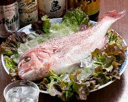 新鮮な魚介類を毎朝豊中豊南市場で仕入れ