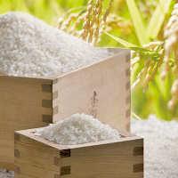 お米は三田米コシヒカリ。一粒一粒に光沢があり、ふっくら柔らか