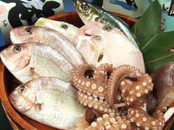 毎日仕入れる瀬戸内近海鮮魚を 造・焼・煮・揚で!