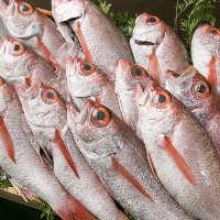 〈高級魚もぜひ〉 キンキ、のどぐろは塩焼きor煮つけがおすすめ