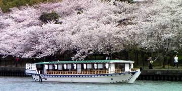 大阪 桜ノ宮 屋形船「大喜丸」 image