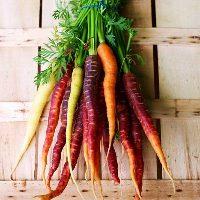 ◆新鮮有機野菜◆ 契約農家様から直接仕入れています