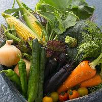 自家栽培の野菜を毎朝収穫 瑞々しく甘みが詰まっています