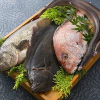 漁港直送の鮮度抜群な旬魚介を お鍋でご堪能ください
