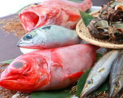 石川県金沢の中央卸より 厳選された新鮮食材を仕入れ