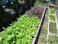 自家菜園のハーブなども使用しています