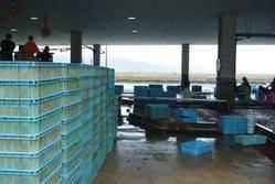 明石浦漁港にセリから参加し、直接仕入を行っています。
