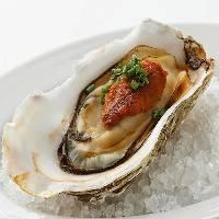 牡蠣を使用した多彩なメニュー。お酒が進むバルメニューも豊富!