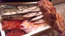 中央市場で仕入れた新鮮な魚介!人気のお造り盛り合わせは絶品!