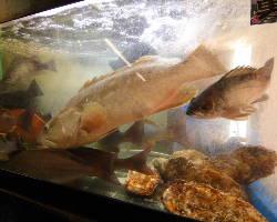 はす、はげ、アカッポ! 新鮮なお魚を調理致します。