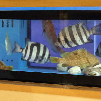 お店の生簀から揚げる活きの良い魚介を、その場で捌いて提供