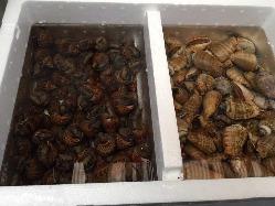和歌山県みなべ漁港より直送された新鮮な魚介類。
