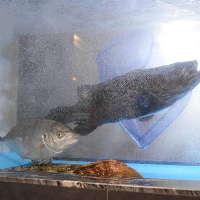 生簀からあげたばかりの新鮮なお魚を使用したお料理をご提供