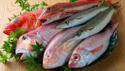 熟練の目利きで調理長自ら厳選!全国の新鮮な魚を使用しています