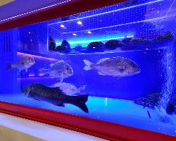 店内の水槽で泳ぐ魚から 選べる活魚料理が人気◎