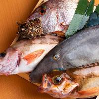 鮮度抜群の旬魚や創作料理を、100種以上の飲み放題とぜひ!