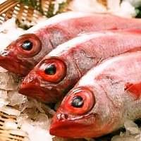 全国から獲れたて鮮魚を直送にて調達。高級魚も続々入荷!