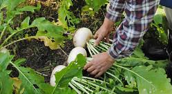 京都の農家さんが丹精込めて作られたお野菜を使用しています。