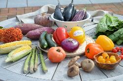 【かんで野菜】 地元で採れた新鮮な野菜を使い調理しています。