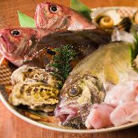 《まずは旬魚》 プリプリ肉厚!脂が乗ってお酒も進みます