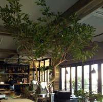 緑を感じる店内は、ゆっくり過ごせる落ち着いた空間。