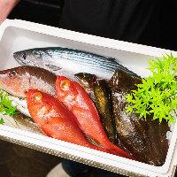 珍しい魚介も♪新鮮な旬の海の幸が東京羽田水産からお店に到着!