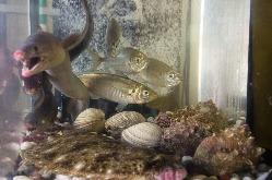 店内には生け簀を完備。新鮮な旬のお魚をお楽しみいただけます♪