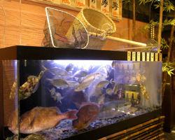 ■活魚水槽■