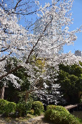 四季を映し出す庭園は120年以上の歴史を語りかけてきます