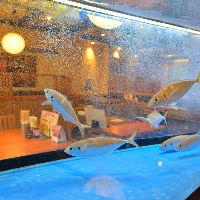入口にはいけすがあり、新鮮なお魚を召し上がることができます!