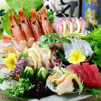 料理人が毎朝目利き!季節の獲れたて鮮魚を人気のお造りでどうぞ