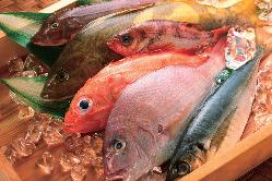 毎変わる紀伊長島直送の鮮魚