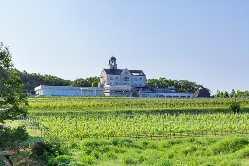 広大なぶどう畑に囲まれたお城のような建物