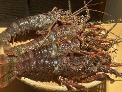 旬の食材を使用した懐石料理