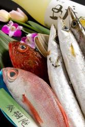 市場からの鮮魚も豊富! コース以外に一品料理も多種充実!