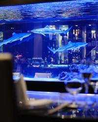 水槽のサメを眺めながら目の前で魅せるシェフの技、五感で料理を堪能