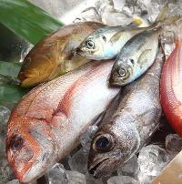 毎日新鮮な鮮魚を市場から仕入れています。